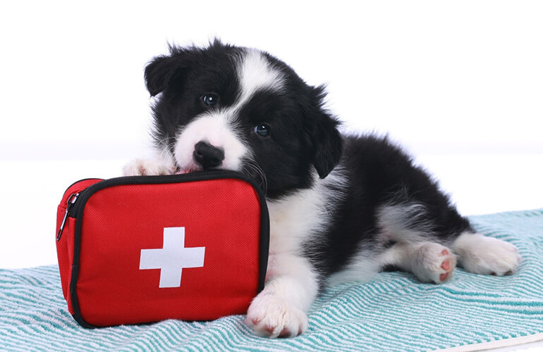 First aid tips for dog owners